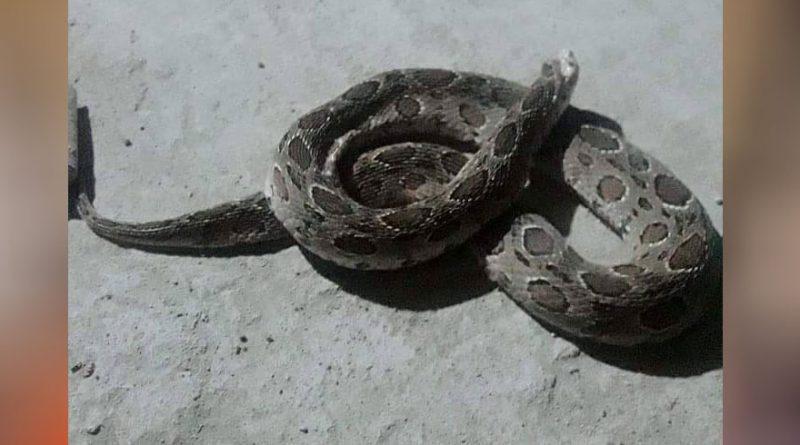 snake bite Archives ⋆ Cambodia News English