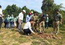 30,000 Trees a Year Planted in Angkor