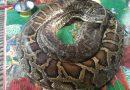 Family Say Goodbye To Pet Python