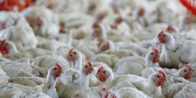 Bird Flu Warning After Vietnam Outbreak