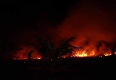 Kampot Coconut Plantation Fire