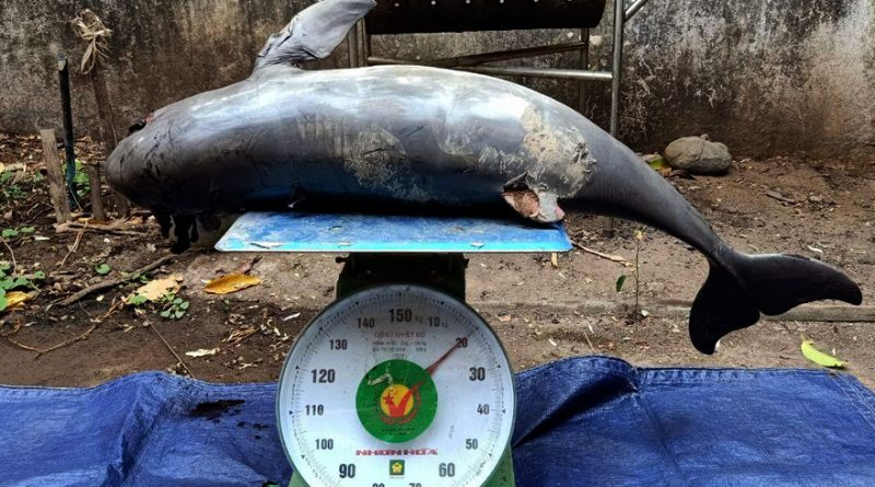 Young Dolphin Died In Kratie