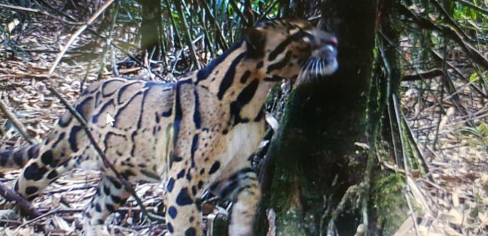 Camera Trap Images Of Virachey Wildlife ⋆ Cambodia News English