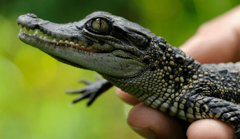 Community Crocodile Wardens Receive International Ranger Award